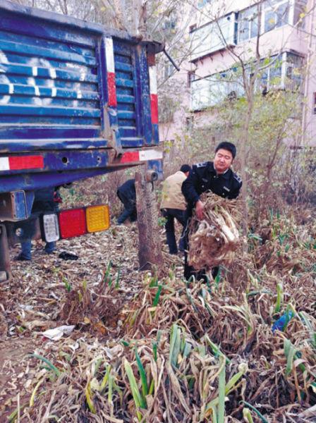 """2.5万公斤大葱占绿地 执法人员帮忙""""搬家"""""""