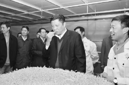 沈阳市副市长王翔坤视察芽菜生产基地,并品尝孵化出的新鲜豆芽 记者 蔡敏强摄