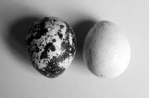 左边的鹌鹑蛋是没浸泡过的,右边的蛋经过浸泡斑点掉了。