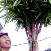 贵州:老安顺青睐阳尘帚