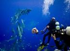 全球七大潜水圣地
