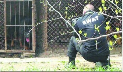 辽阳灯塔市福胜村一只发狂藏獒咬伤两人,5月10日,民警将其击毙。视频截图