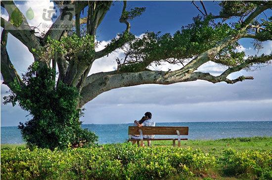 新浪旅游配图:北海银滩榕树下 来源:远方网 作者:大海