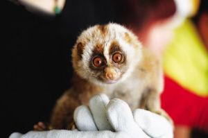 小懒猴紧紧地抓着桌角,不知是害羞还是紧张 王野 摄