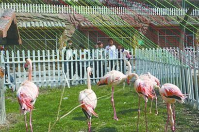 百鸟园里的鸟儿们曾给很多小朋友留下美好回忆。 首席记者 李东 摄