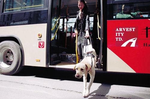 沈阳导盲犬乘公交遭司机严厉抵制熄火拒载。