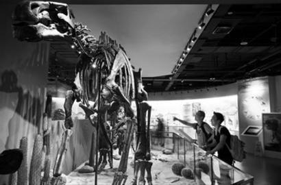 """这只世界上最完整的双庙龙化石,矗立在大连星海广场""""恐龙传奇""""馆入口,待开馆之日人们可一睹它的雄姿。 大连圣亚海洋世界供图"""