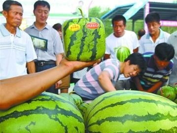 这种方形西瓜是专门用模具控制长成的,表面还有吉祥祝福语。