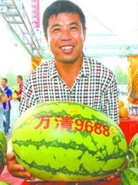 """李红新特意带来了重达70斤的""""瓜王""""参展。本组图片均由记者 查金辉 摄"""