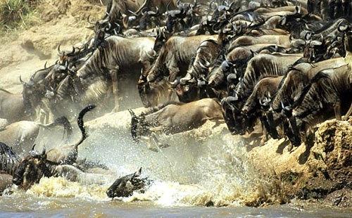 东非野生动物大迁徙
