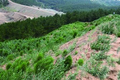 建平县中天矿业植被恢复现场.