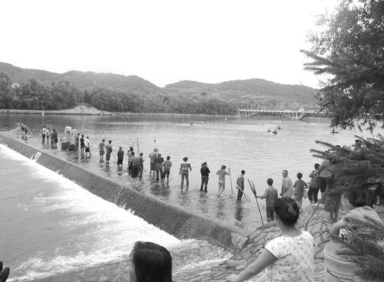 千余名市民带着各式各样的捕鱼工具到此捕鱼