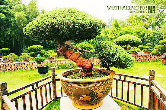 新浪旅游配图:千年盆景 摄影:李双喜