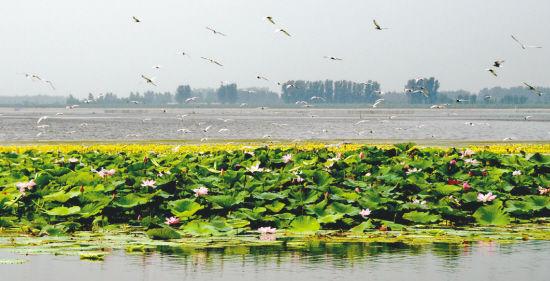 珍珠湖飞鸟