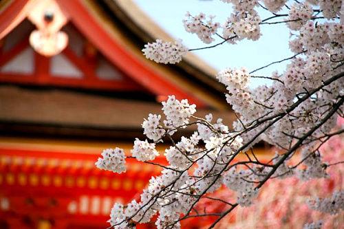 清水寺(Kiyomizu Temple)