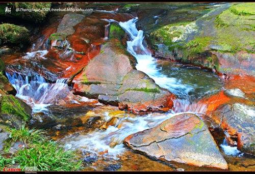 新浪旅游配图:金鞭溪水流最为清澈的一段 图:翔子的新浪博客