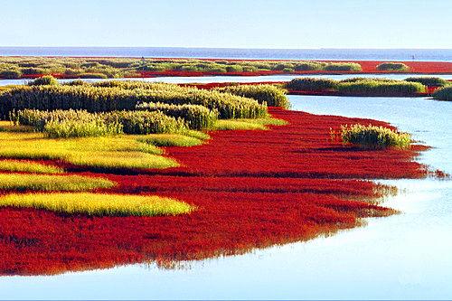 红海滩 新浪辽宁旅游配图