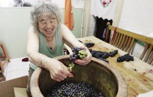 每年做葡萄酒是曲阿姨生活最大的乐趣