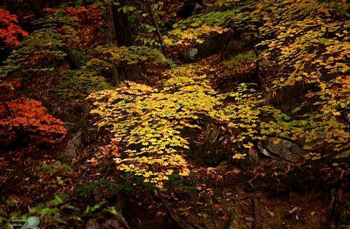 三块石国家森林公园美景