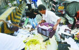 村民哄抢葡萄。本报记者 陈若梦 摄
