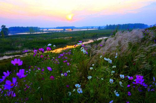 水库湿地日落美景