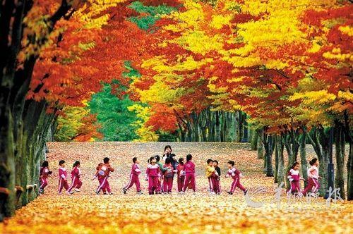 枫叶装扮出韩国最美的秋天,图为韩国蔚山体育公园一景 韩国旅游发展局供图