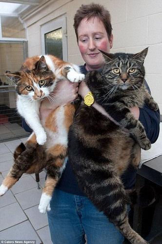 """肥猫""""小胖""""和""""布丁"""""""