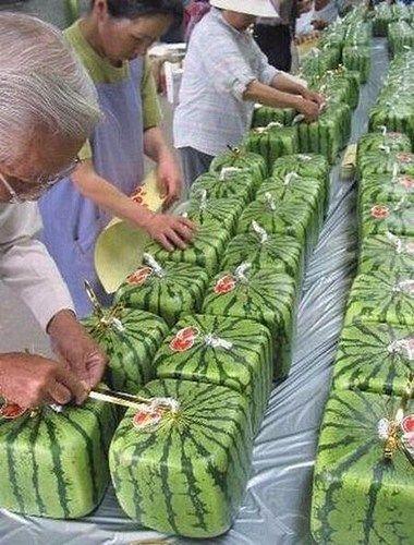 日本著名的方西瓜