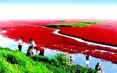 葫芦岛红海滩最佳旅游时间