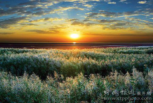 日出、日落的苇海非常迷人(宗树兴摄)