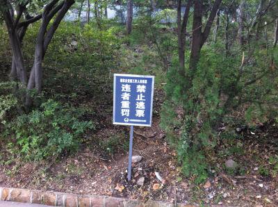 """白玉山景区的警示牌根本挡不住""""逃票客""""。"""