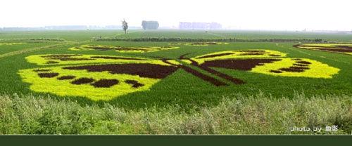 辽河七星山湿地稻田艺术