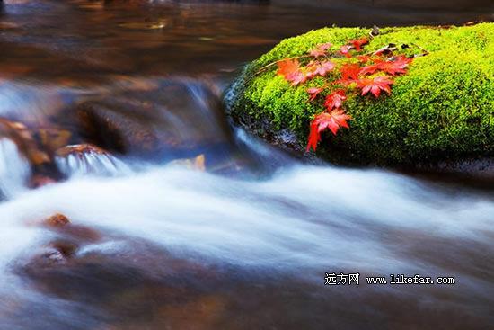 流水旁的红叶 作者:小懒猫