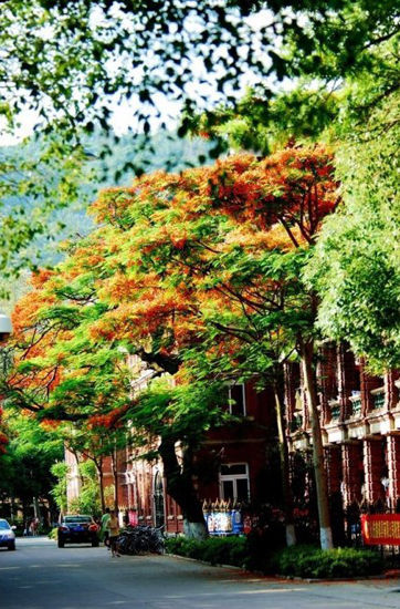 新浪旅游配图:美丽的校园 摄影:TIM生命过客