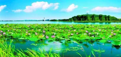 迷人的莲花湖湿地。