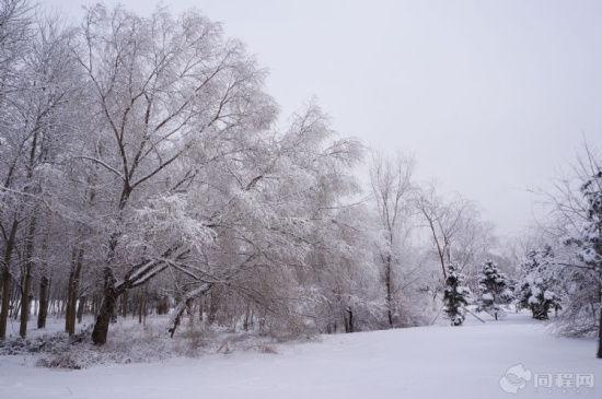 雪后五里河公园