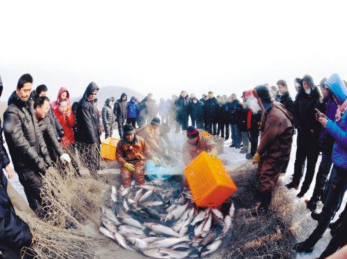 秀湖冬捕一网捞了5万斤