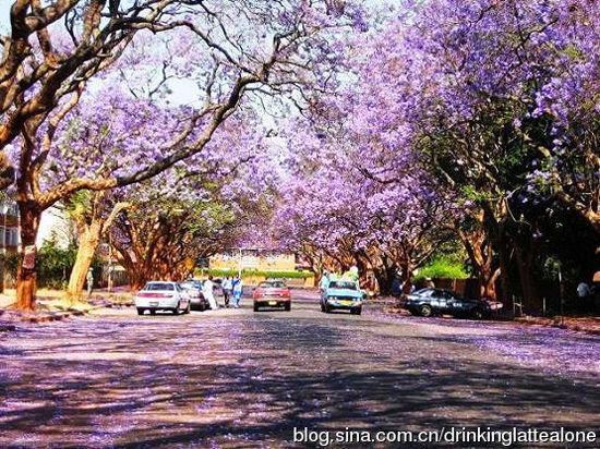 津巴布韦首都哈拉雷的街头