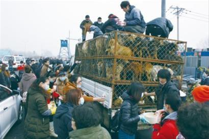 爱狗人士为这车狗带来了水和食物。