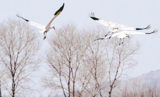 空中鸟儿在盘旋