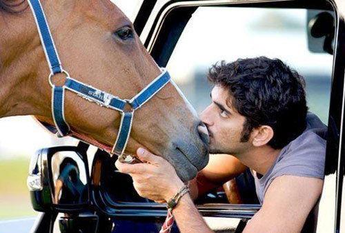 迪拜王子:订制专给马坐的私人飞机