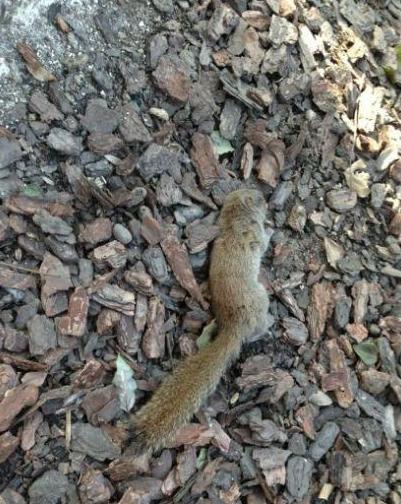 遇难的松鼠