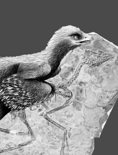 鸟化石图片还原