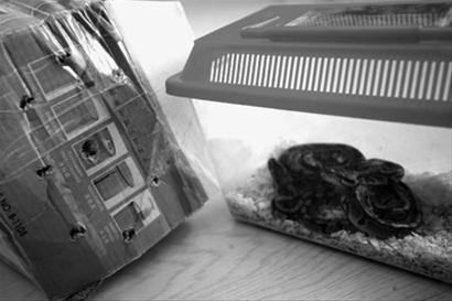 为了不让小蛇死掉,邮寄方将盒子扎了许多小窟窿。 记者 李东 摄