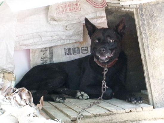 台湾嘉义县朴子市80岁陈姓老翁,遭到自家所养的黑色土狗咬死。