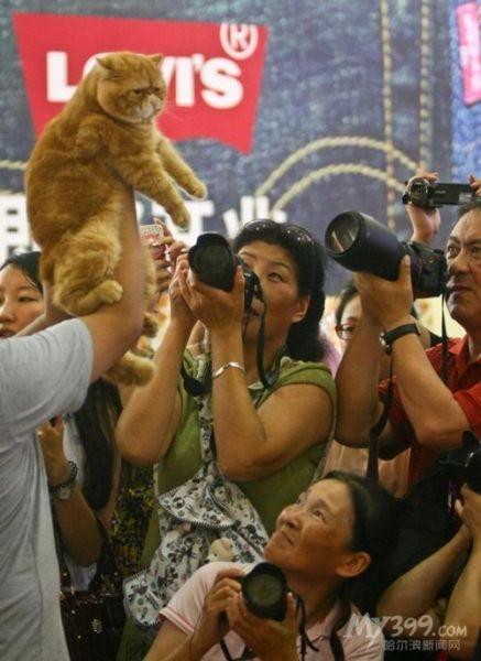冠军加菲猫