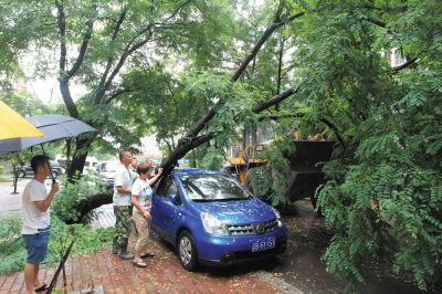 物业工作人员找来铲车扶树,轿车才得以脱困。