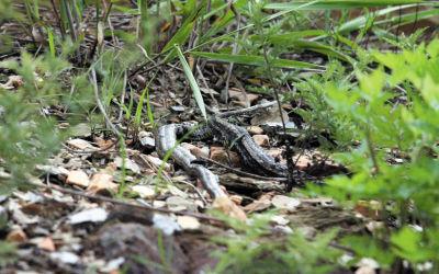 路边树丛里一条蛇已经死亡。