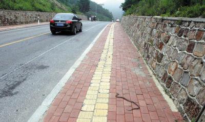 公路两侧是山坡,并建有挡土墙,一条蛇正费力地爬在人行道上。