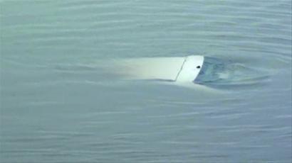 7月19日下午,民警和消防人员赶到现场时,秦明的爱车已在离岸边50米远的水面下沉了。 本组图片由警方提供